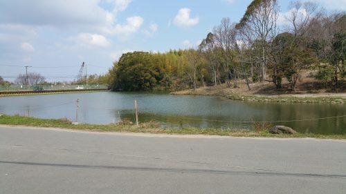 やまとカフェの前の池