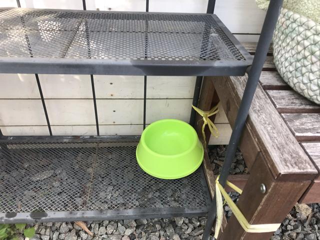 アリトルビットカフェのワンちゃんの水飲み器