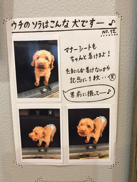 サクールヘアー看板犬ソラちゃん