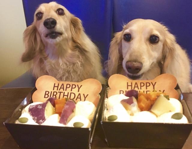 ワンちゃんのお誕生日をケーキでお祝い