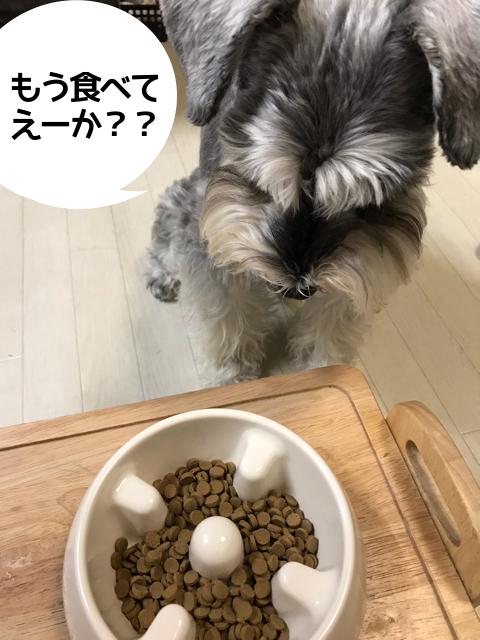 リブドッグを食べるワンちゃん