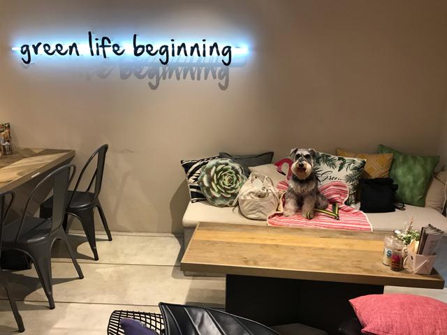 グリーンライフビギニングの店内と愛犬
