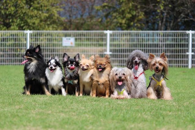 犬が8頭並んだ写真