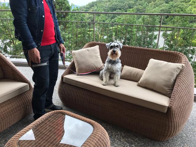 ドッグアップヴィラのワンちゃん専用ホテルのワンちゃん用足湯にあるソファーと愛犬