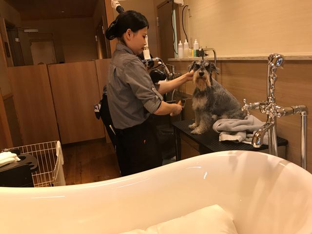 ドッグアップヴィラのシャンプールームでシャンプー中の愛犬