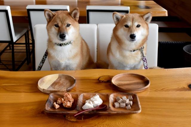 柴犬の食事風景