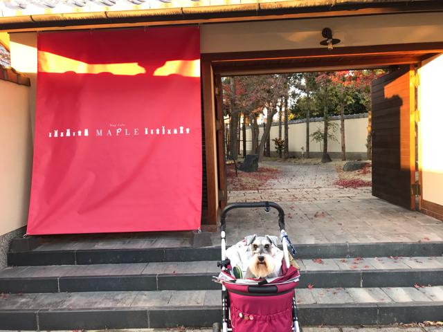 ドッグカフェメイプルの入口