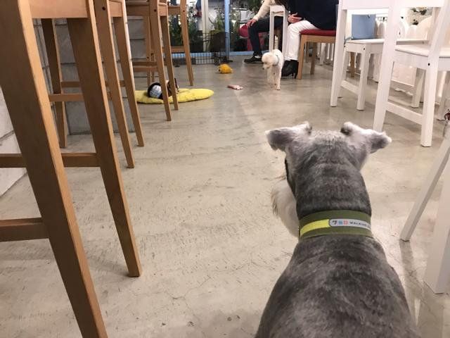 ドッグカフェゼロの店内