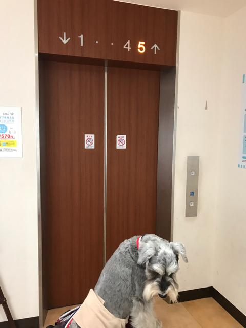 阪急ハロードッグ西宮阪急店のエレベーター前