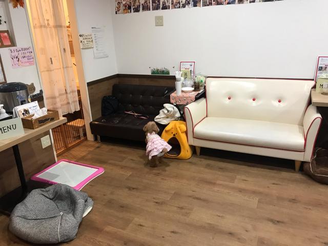 保護犬カフェ堺店の店内