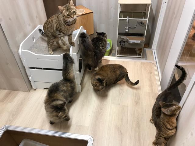 カフェメディマルの猫ちゃん部屋