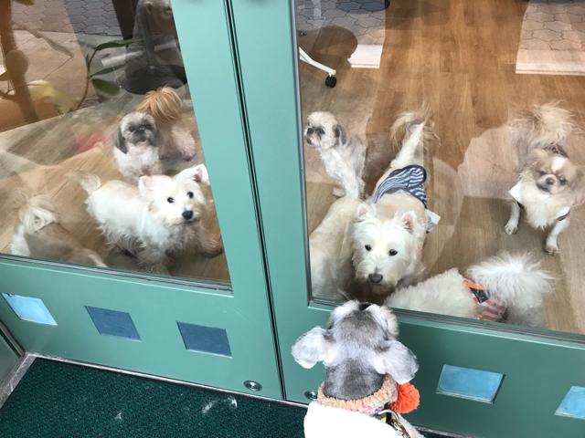 カフェメディマルの入口と看板犬