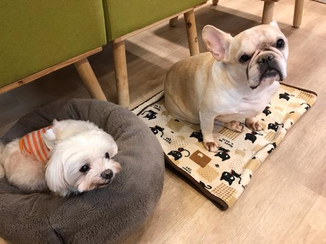 カフェメディマルの看板犬
