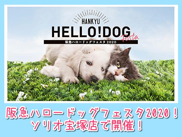 阪急ハロードッグフェスタソリオ宝塚