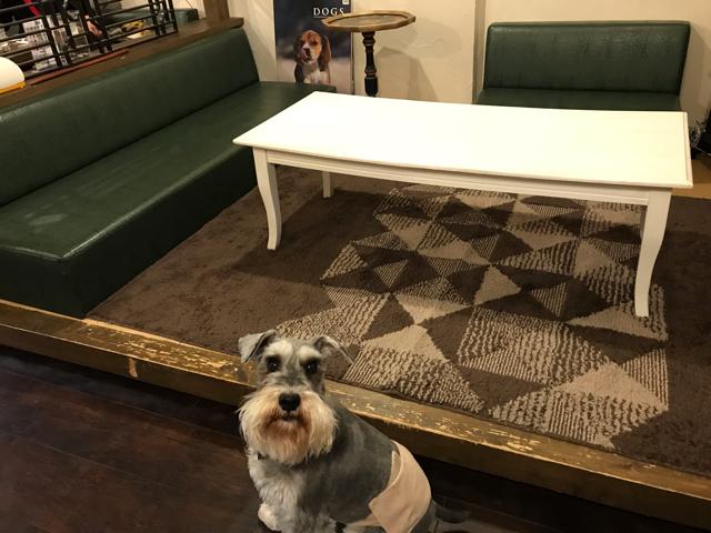 カフェ彦の店内と愛犬
