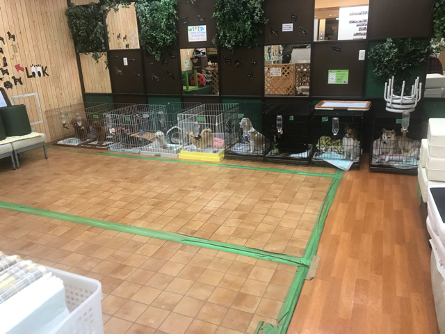 保護犬パーク長居店の室内ドッグラン