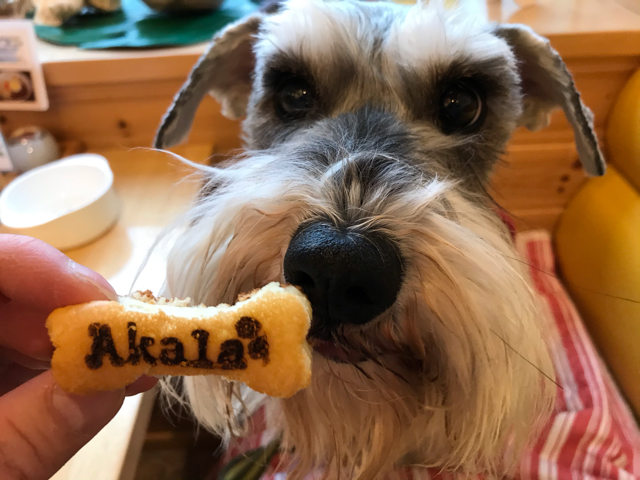 カフェ&ダイニングアカラのワンちゃん用パンケーキと愛犬