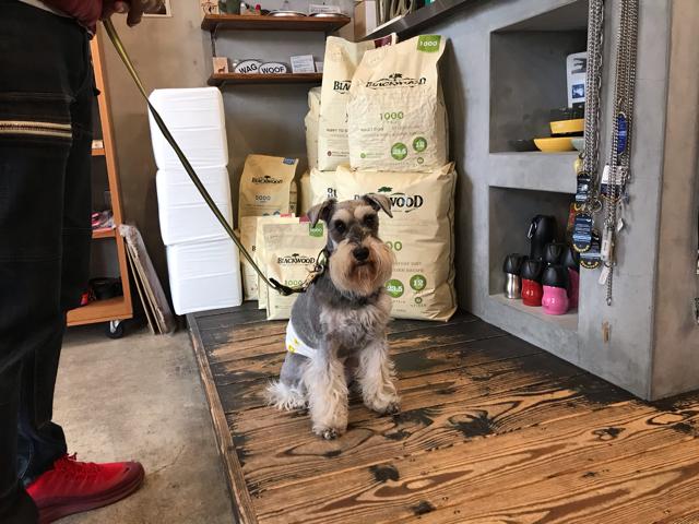 コンコードの店内で写真を撮る愛犬