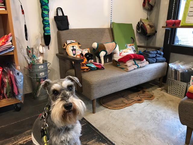 コンコードの店内と愛犬