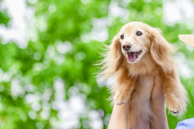 可愛いワンちゃんの笑顔写真