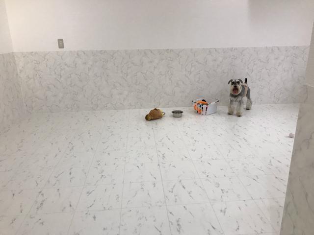 エイトデイズの室内ドッグランで遊ぶ愛犬