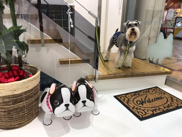 エイトデイズの店内で記念写真を撮る愛犬