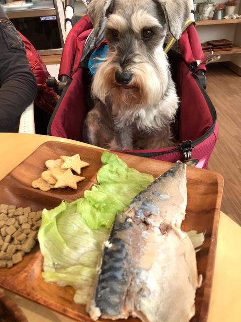 ハローカフェの限定メニューを見つめる愛犬