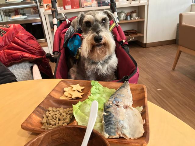 ハローカフェのワンちゃん特別メニューと愛犬