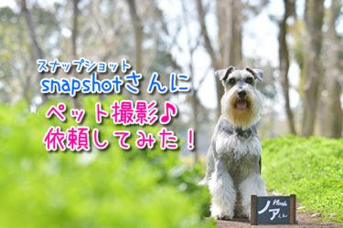 【ペットのフォト撮影】snapshot(スナップショット)さんに愛犬の出張フォト撮影を依頼してみた!in服部緑地公園レポ♪