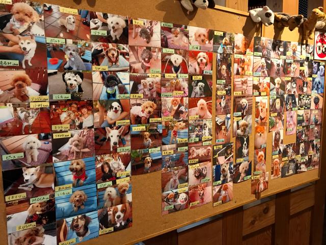 カフェ&レストランJURIAに遊びに来たワンちゃん達の写真