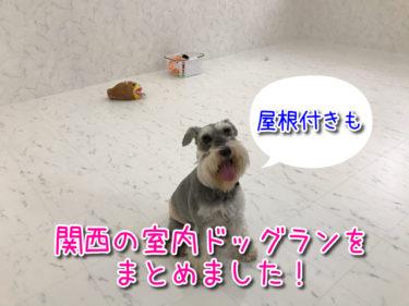 関西の室内ドッグラン(屋根付きも含む)をまとめました!雨の日や暑い日も快適に遊べるのが嬉しい♪