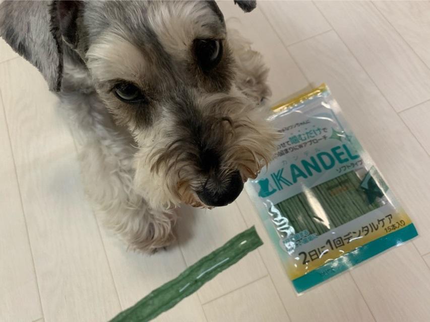 ドクターワンデルとカンデルと愛犬