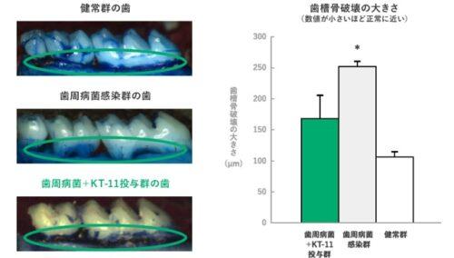 クリスパタス乳酸菌の説明