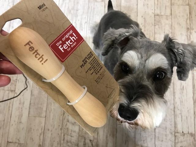 犬用おもちゃフェッチを見つめる愛犬