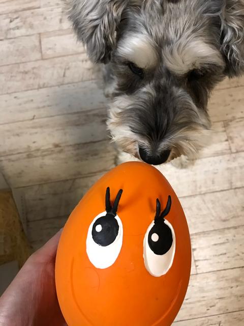 ワンスマイルボックスのおもちゃと愛犬