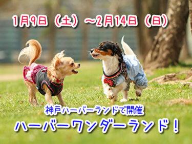 【ハーバーワンダーランド】期間限定ペットイベント!神戸ハーバーランド高浜岸壁に無料ドッグラン登場!1月9日~2月14日開催!