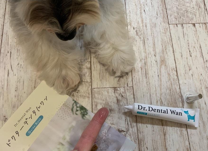 ドクターデンタルワンを愛犬に与えている